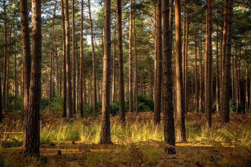 Swinley Forest | Travel Photography